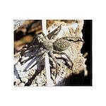 Furry Wolf Spider on Rocks Throw Blanket