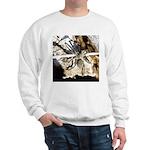Furry Wolf Spider on Rocks Sweatshirt