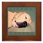 Yellow Labrador Dog Sleeps Framed Tile