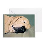 Yellow Labrador Dog Sleeps Greeting Cards (10/pk)