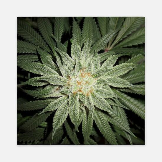 Cannabis Plant Queen Duvet