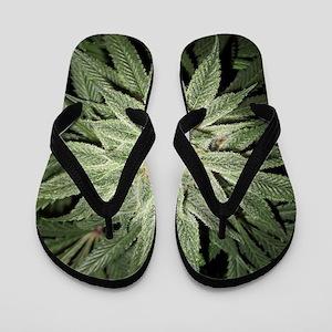 Cannabis Plant Flip Flops