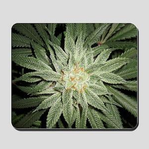 Cannabis Plant Mousepad