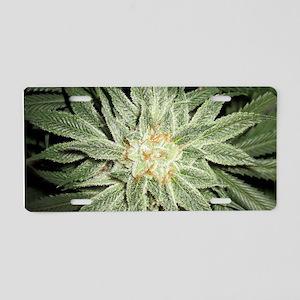 Cannabis Plant Aluminum License Plate