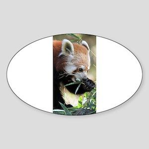 Red Panda 002 Sticker
