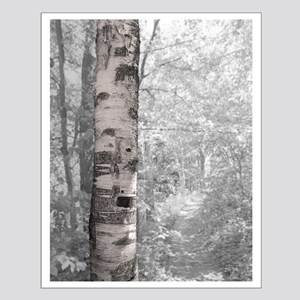 Birch Tree In Forest Posters