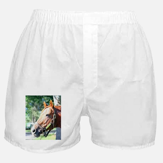 "SECRETARIAT - ""Big Red"" Boxer Shorts"