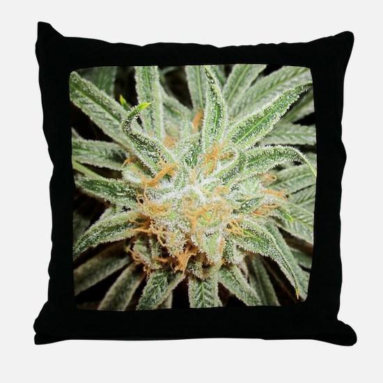 Cannabis Sativa Flower Throw Pillow