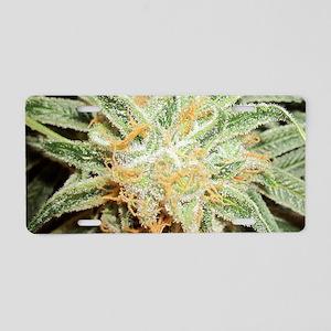Cannabis Sativa Flower Aluminum License Plate