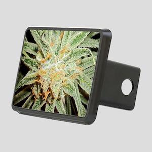 Cannabis Sativa Flower Rectangular Hitch Cover