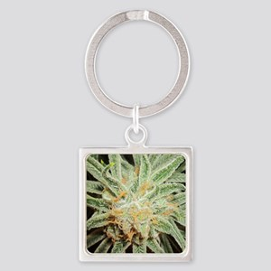 Cannabis Sativa Flower Square Keychain