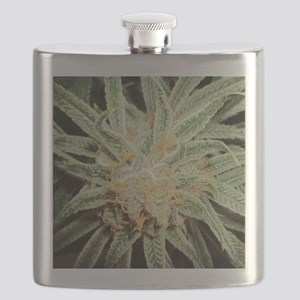 Cannabis Sativa Flower Flask