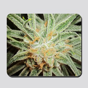Cannabis Sativa Flower Mousepad