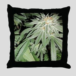 Cannabis Kush Plant Throw Pillow