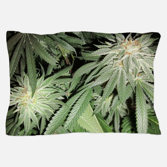 Cannabis Kush Plant Pillow Case