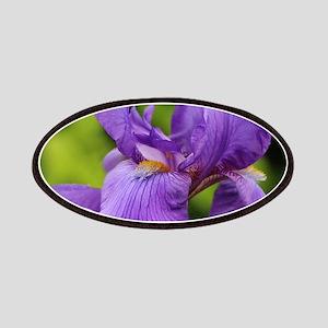 Purple Bearded Iris Patches