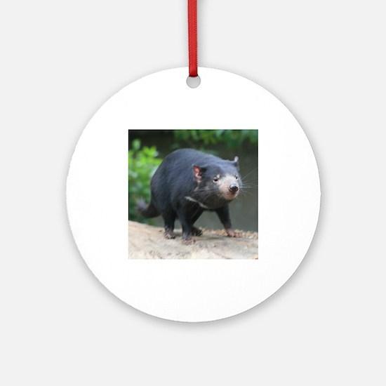 Cute Tasmanian Devil Photo Ornament (Round)