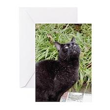 Inspirational Black Cat Greeting Cards