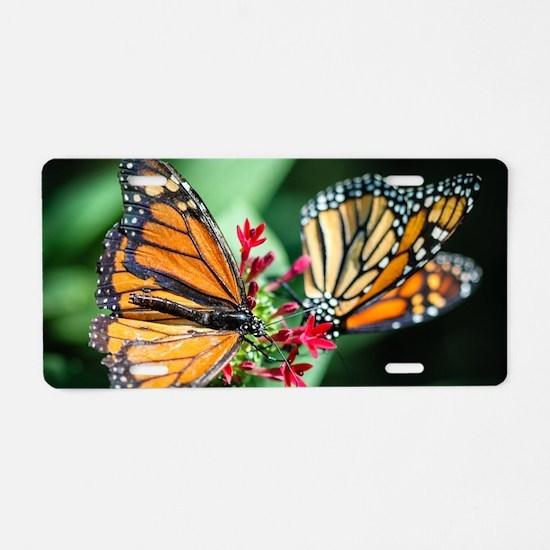 Monarch Danaus Plexippus Aluminum License Plate