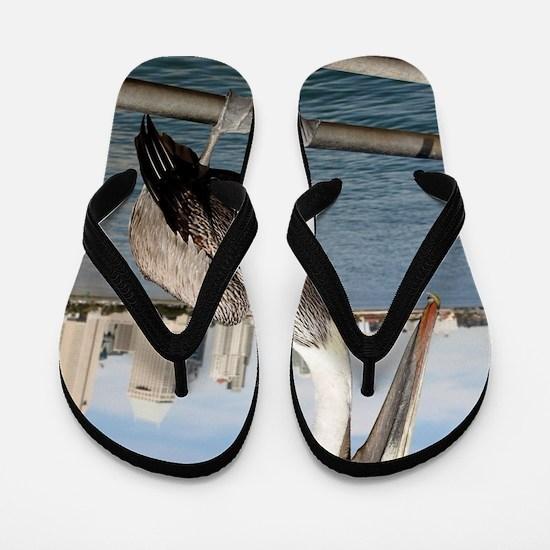 San Diego Pelican Flip Flops