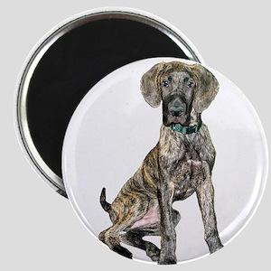 Brindle Great Dane Pup Magnet