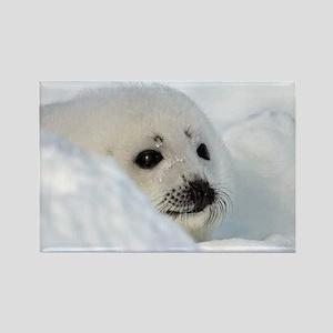 fur seal Magnets
