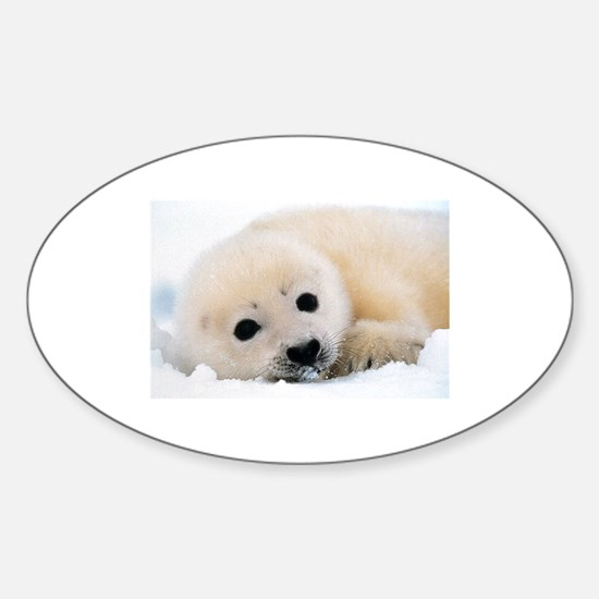 fur seal Decal