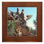 Giraffe (T) Framed Tile