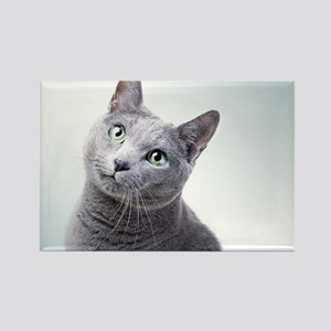 russian blue cat Magnets