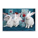 Holiday Gift Bunnies, Dexter, Kirby, Shasta, Sierr