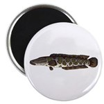 Northern Snakehead fish Magnets