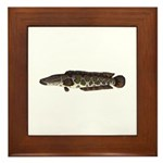 Northern Snakehead fish Framed Tile