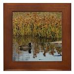 Coot on Pond Framed Tile