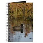 Coot On Pond Journal