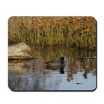 Coot On Pond Mousepad