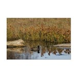 Coot On Pond Posters Mini Poster Print