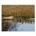 Coot On Pond Posters Small Poster