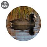 Coot on Pond 3.5