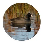Coot On Pond Round Car Magnet