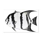 Spadefish Posters