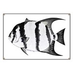 Spadefish Banner