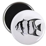 Spadefish Magnets