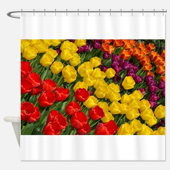 Colorful spring tulips in rows Shower Curtain