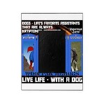 Zuperman Zarro - Live Life With A Dog Picture Fram