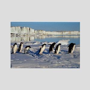 Penguin Place Rectangle Magnet