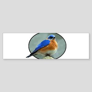 Bluebird in Oval Frame Bumper Sticker