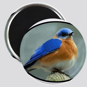 Bluebird in Oval Frame Magnets
