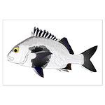 Black Margate fish Posters