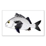 Black Margate fish Sticker