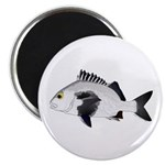 Black Margate fish Magnets